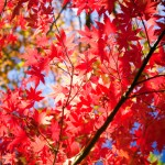 Best-Autumn-Trees-and-Plants